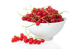 Red currants. In white bowl isolated on white background Stock Images