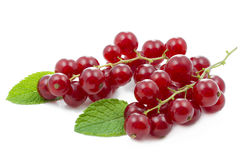Red currants. With mint leaf on white background Stock Image