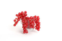 Red currants. Fresh currants in a glass bowl stock photos