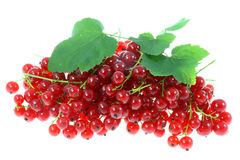 Red currants. Royalty Free Stock Photography