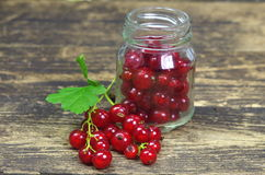 Red currants Royalty Free Stock Photo