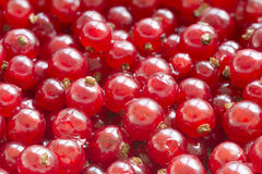 Red currants as background Royalty Free Stock Photos