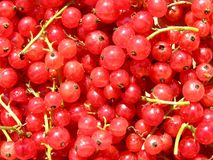 Red currants background Royalty Free Stock Photo