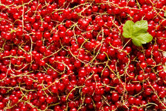 Red currants for background Royalty Free Stock Photos