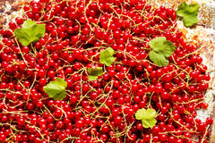 Red currants for background Royalty Free Stock Photography