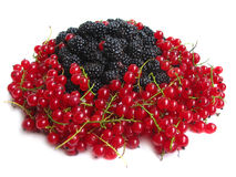 Red currants and blackberries Stock Images