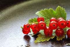 Red currants on blurred dark background Royalty Free Stock Photo