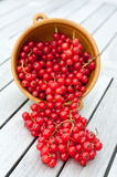 Red Currants in a Bowl Stock Image