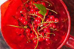 Red currants in bowl Royalty Free Stock Photos