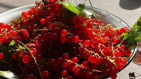 Red currants in a bowl stock video footage