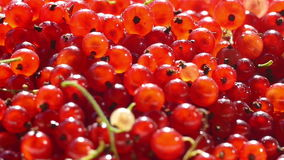 Red currants in a bowl sprinkling stock video footage
