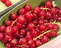 Red currants in a box stock photography