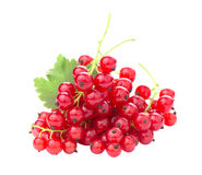 Red currants. Branch of red currants isolated on white background Royalty Free Stock Photography