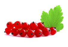 Red currants. Branch of red currants isolated on white background Royalty Free Stock Images