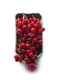 Red currants in a cardboard box Stock Images