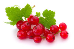 Red currants . Stock Images