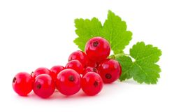 Red currants . Stock Photos