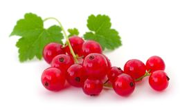 Red currants . Close up of red currants on white Stock Photography