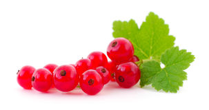 Red currants . Royalty Free Stock Image