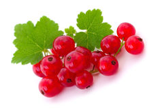 Red currants . Royalty Free Stock Photo