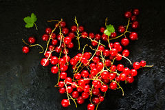 Red currants on a dark background Stock Photography