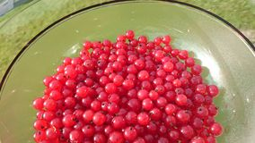 Red currants. Freshly picked red currants Royalty Free Stock Photos