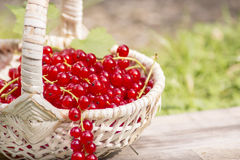 Red currants. From the garden Royalty Free Stock Photo