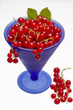Red currants Stock Photo
