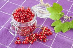 Red currants in a jar Stock Image