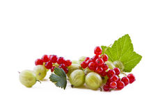 Red currants and green gooseberry Royalty Free Stock Photos