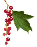 Red currants and green leaf isolated on white Royalty Free Stock Photography