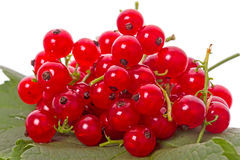 Red currants on a green leaf Royalty Free Stock Image