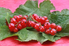 Red currants with green leafs. Fresh red currants with green leafs on the red background Stock Photography