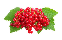 Red currants and green leaves Royalty Free Stock Images