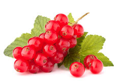 Red currants and green leaves still life Royalty Free Stock Photos