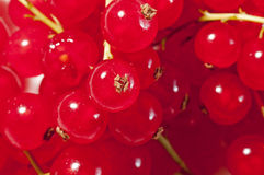 Red currants,  healthy and delicious. Royalty Free Stock Photography