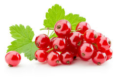 Red currants isolated on the white background Stock Photography
