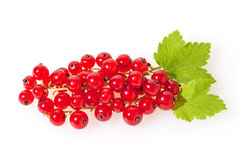 Red currants isolated on white Royalty Free Stock Photo