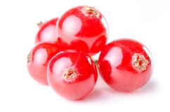 Red currants isolated before white Royalty Free Stock Photography