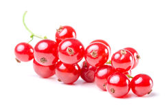 Red currants isolated before white Stock Images