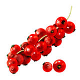 Red currants isolated on white Royalty Free Stock Image
