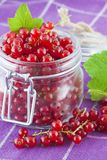 Red currants in a jar Royalty Free Stock Photos