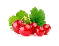Red currants with leaf Royalty Free Stock Photo