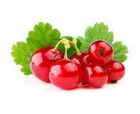Red currants with leaf Royalty Free Stock Photography