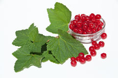 Red currants with leaves. Red currants in a bowl with leaves isolated on white background royalty free stock photography