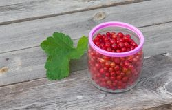 Red currants in glass jarl Royalty Free Stock Photo
