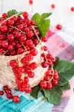 Red Currants (macro shot) Stock Image