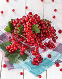 Red Currants (macro shot) Stock Photography