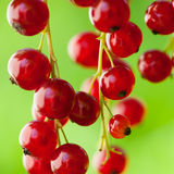 Red currants outsoors Royalty Free Stock Photos