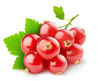 Red currants. Over white background stock image